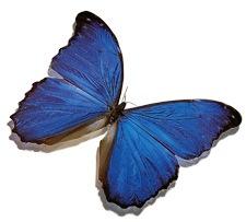 20070904-mariposa